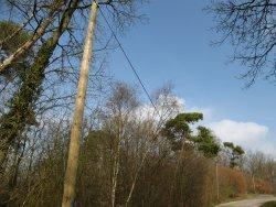 Plantation et lagage autres r glementations for Reglementation elagage des arbres